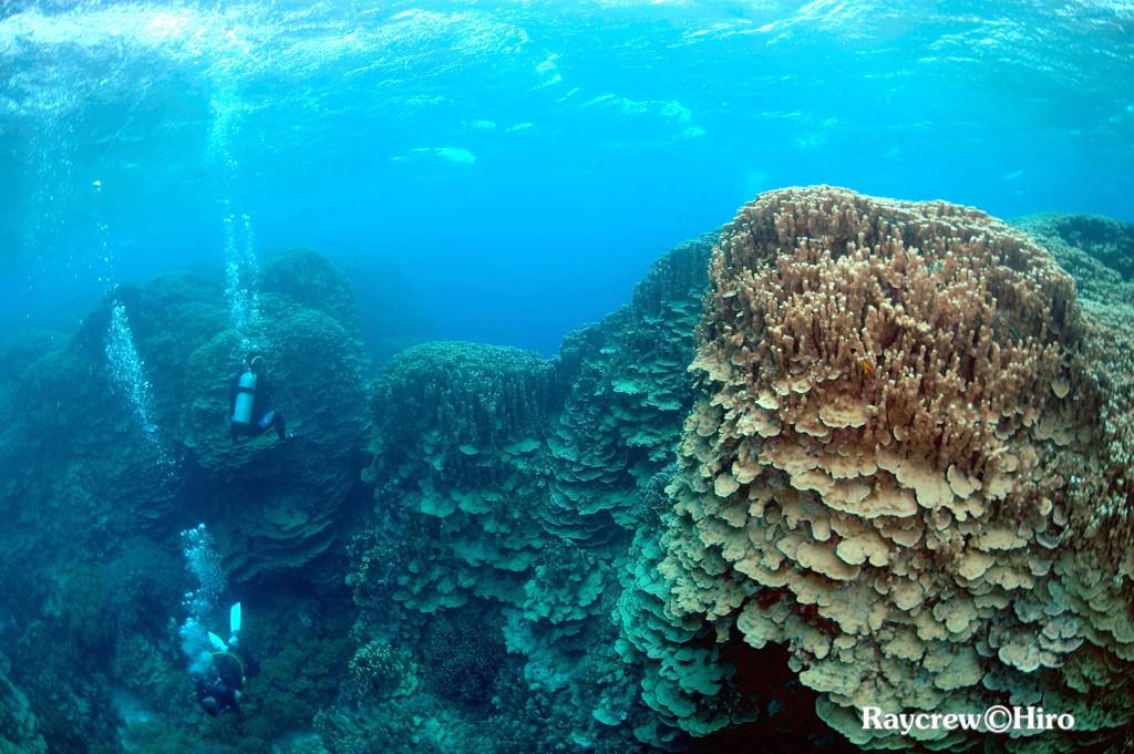 マーシャル諸島サンゴ