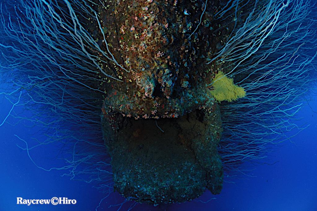 ビキニ環礁ガイドとの日々