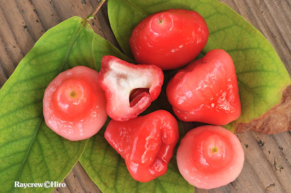 レンブ/ジャワフトモモ【ピンクの不思議な南国のフルーツ】