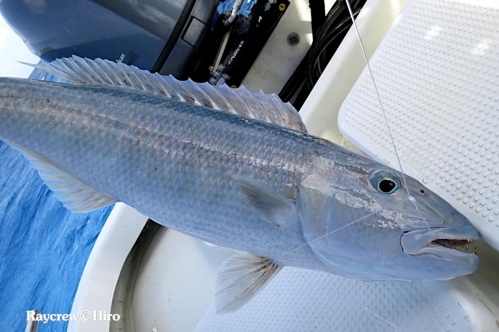 ボトムフィッシング【水中での魚の様子】