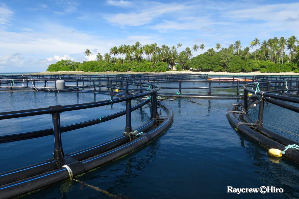 マジュロ環礁の洋上養殖ケージ水中システム補修作業