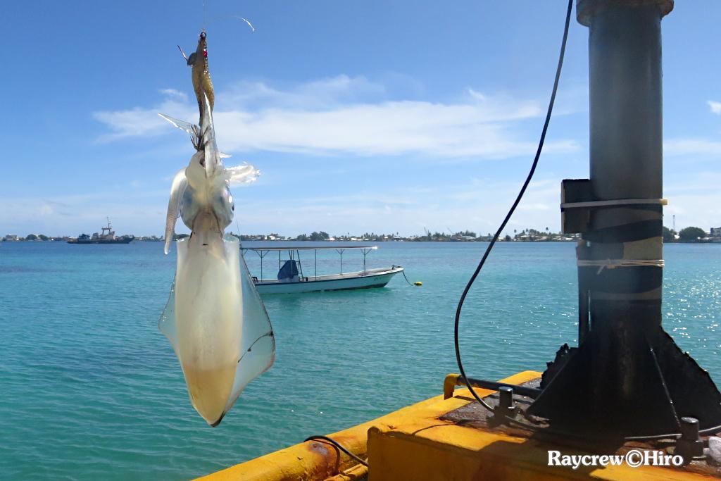 最寄りの港でアオリイカを釣る