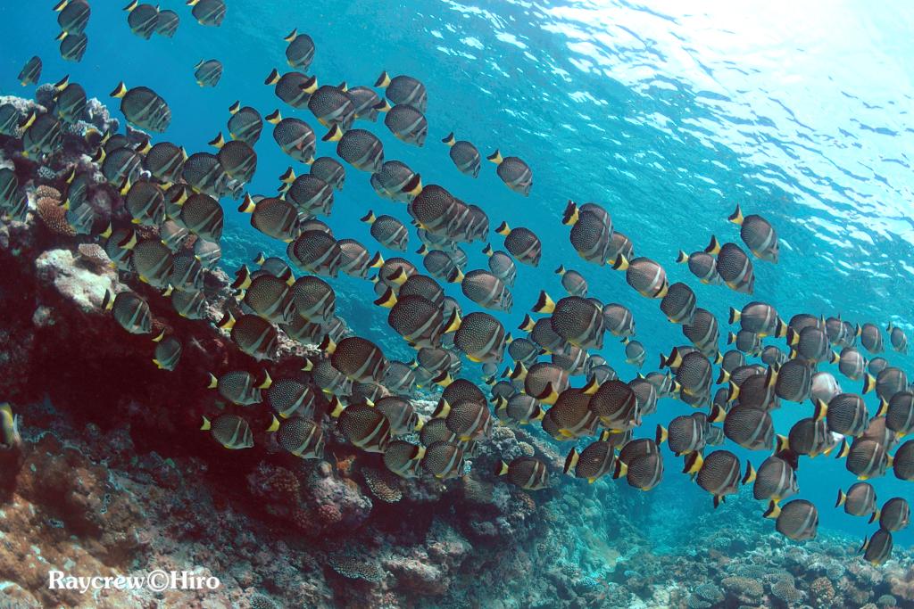 マジュロ環礁でフィッシング&スキューバダイビング
