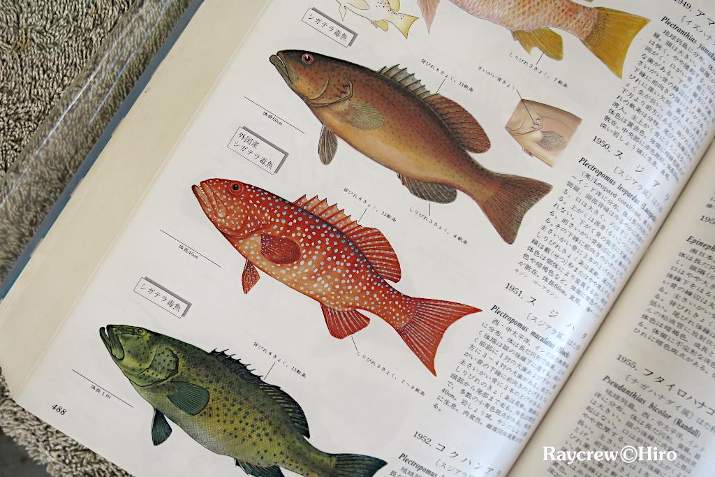 シガテラ毒魚とは【マーシャル諸島の魚達の実態】
