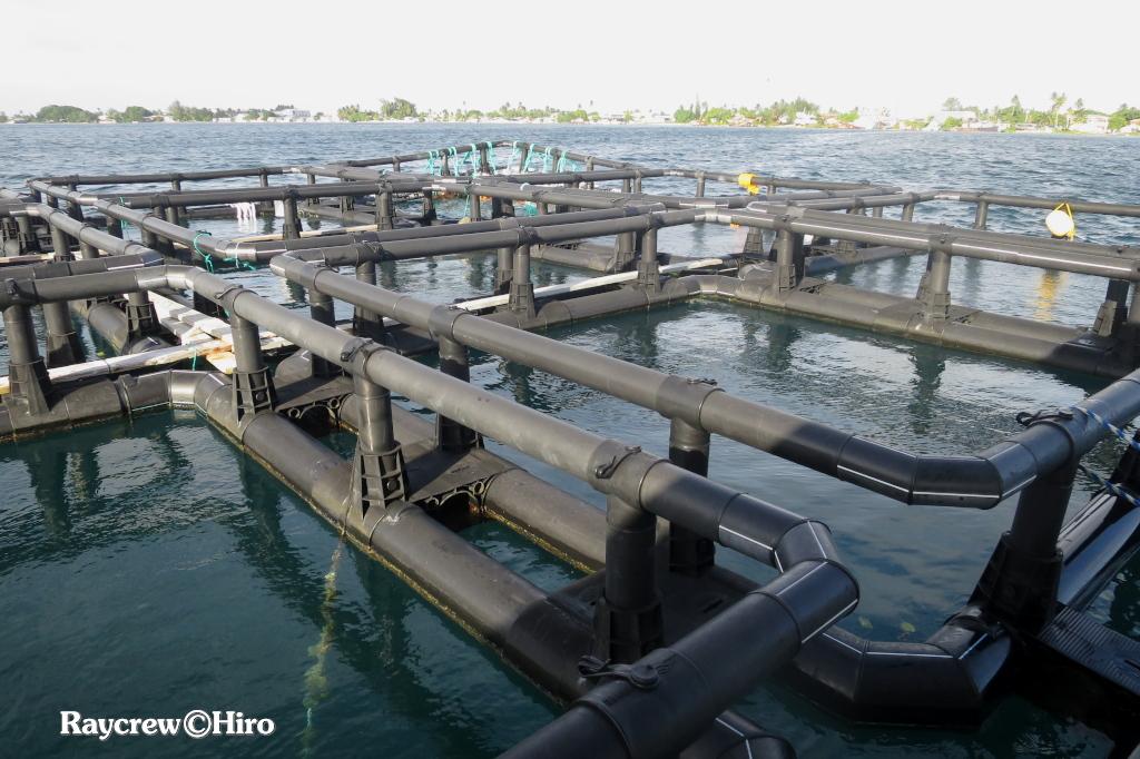 マジュロ環礁の洋上養殖ケージ新設置作業【Day4】