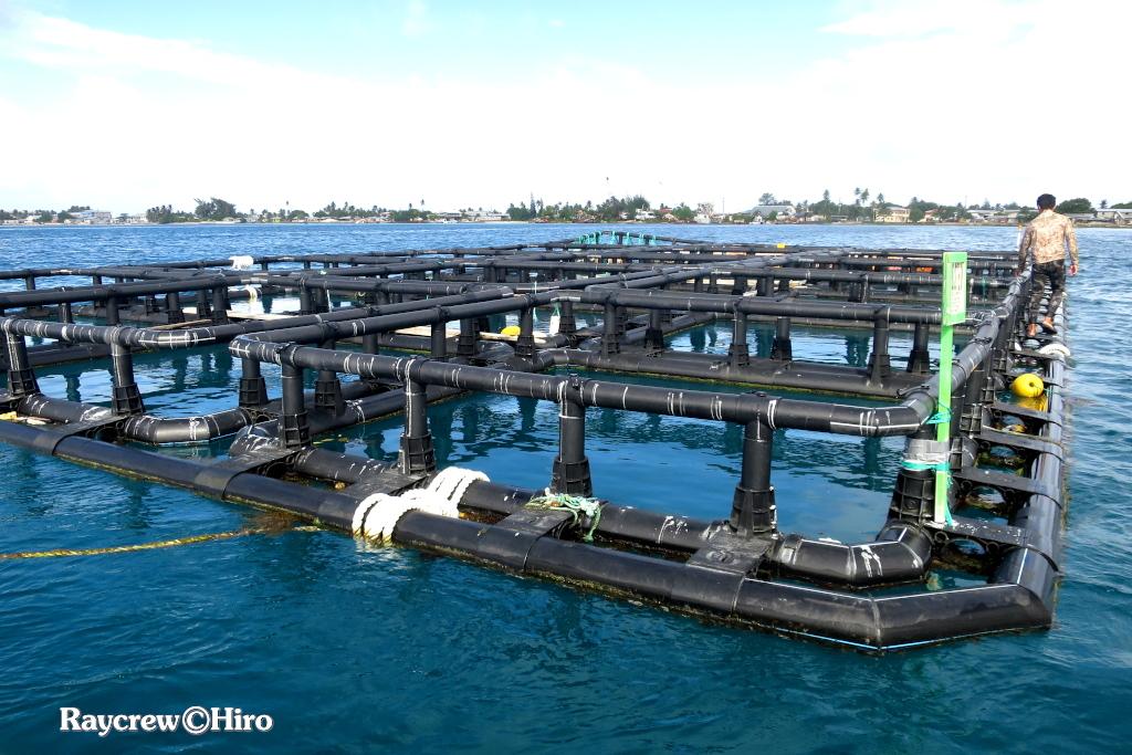 海上ケージ固定強化作戦【マーシャル諸島で魚の養殖】