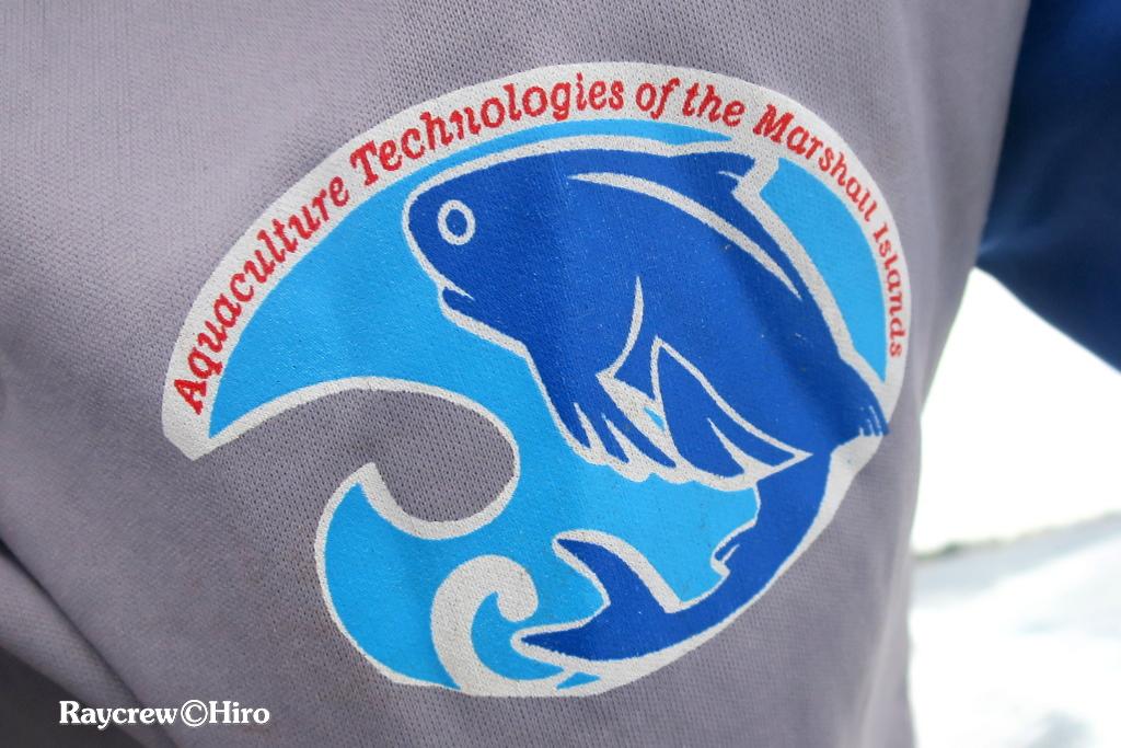 マジュロ環礁の養殖魚【Moi fish/モイ/ナンヨウアゴナシ】