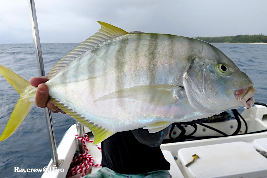 マーシャル諸島でボトムフィッシング【コガネシマアジを釣る】